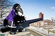 Where to Watch the Ravens in the 2012 NFL Playoffs