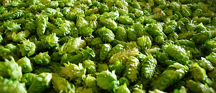 A Sixer of IPA Styles for Celebrating National IPA Day