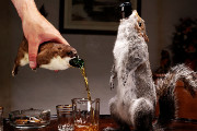 Craft Beer Baltimore | BrewDog is Releasing a $20,000 Beer Stuffed in a Taxidermied Squirrel | Drink Baltimore