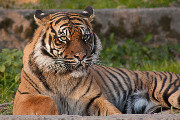 Craft Beer Baltimore   Drink This Beer to Help Save the Tiger Population   Drink Baltimore